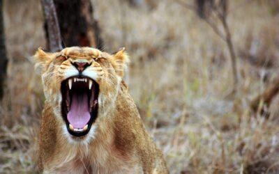 La colère : la comprendre, la gérer